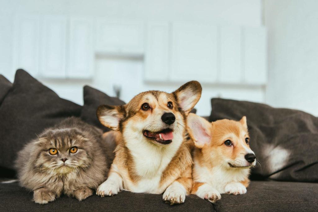 pet-friendly-rental-property-phoenix-az